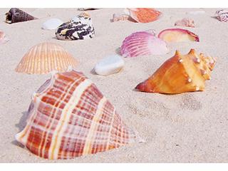 Spielsand mit Muscheln, Südsee-Beige